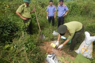 Hạt Kiểm lâm VQG Phong Nha – Kẻ Bàng: Tiêu hủy tang vật trong vụ án hình sự
